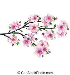 fleur cerise, arbre, sakura, japonaise
