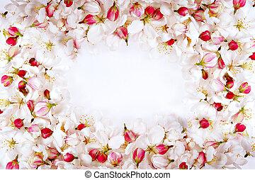 fleur, cerise, cadre, pétales