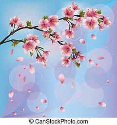 fleur, cerise, -, sakura, japonaise
