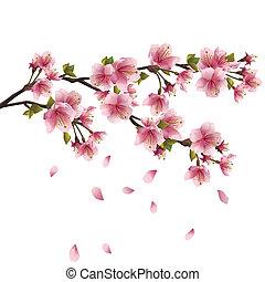 fleur, cerisier, sakura, japonaise