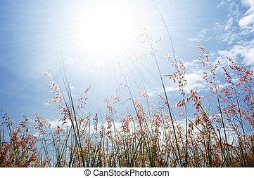 fleur, ciel, herbe, sauvage