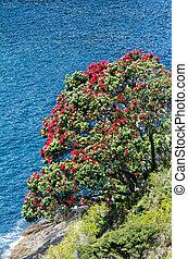 fleur, fleurs, pohutukawa, rouges