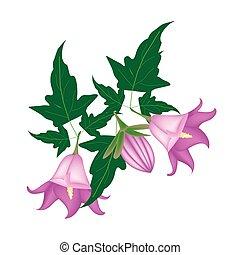 fleur, fond, campanule, rotundifolia, branche, blanc