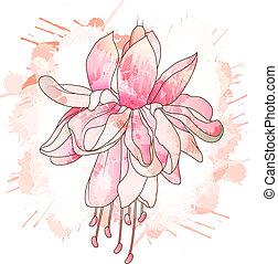 fleur, fuchsia, dessin