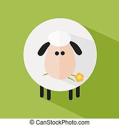 fleur, mouton, blanc