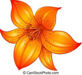 fleur orange, lis