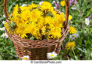 fleur, pissenlit, panier