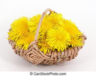 fleur, pissenlit, puissance
