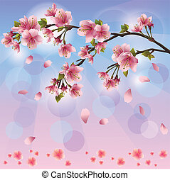 fleur, printemps, -, japonaise, arbre, sakura, fond, cerise