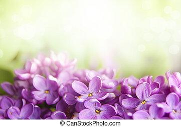 fleur, printemps, lilas, fond