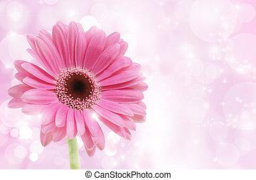 fleur rose, gerbera
