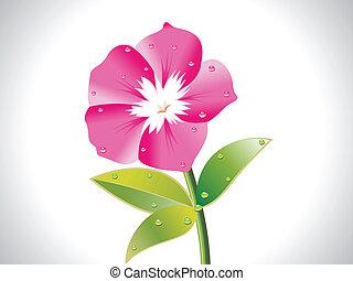 fleur, rose, résumé
