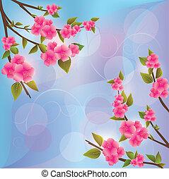 fleur, sakura, fond