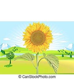 fleur soleil, été