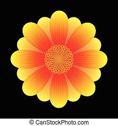 fleur, tournesol, résumé
