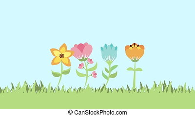 fleurs, animation