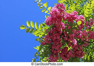fleurs, ciel, rose, arbre, fond