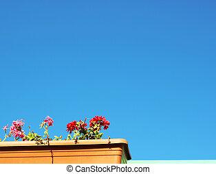 fleurs, coloré, bleu ciel