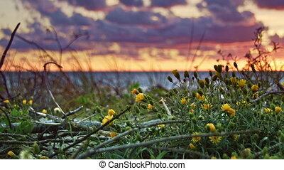 fleurs, coucher soleil, mer