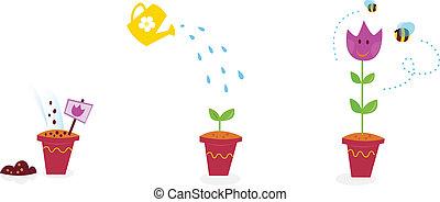 fleurs, croissance, étapes, -, tulipe, jardin