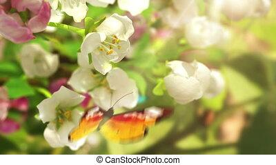 fleurs, floraison, papillons