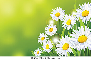 fleurs, fond, pâquerette
