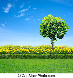 fleurs, herbe, jaune