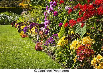 fleurs, jardin, coloré