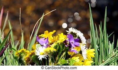 fleurs, mélange, printemps