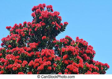 fleurs, pohutukawa, rouges