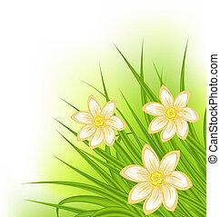 fleurs, printemps, herbe, arrière-plan vert