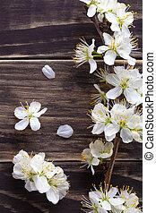 fleurs, printemps