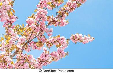 fleurs ressort, arbre, pêche