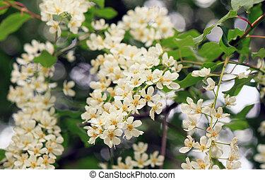 fleurs ressort, arbre, pomme, fleur