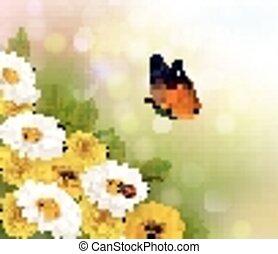 fleurs ressort, butterfly., vector., arrière-plan.