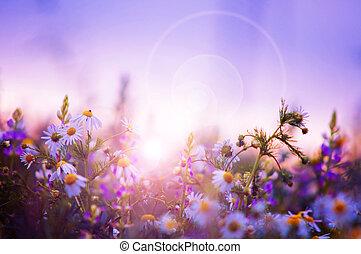 fleurs ressort, champ