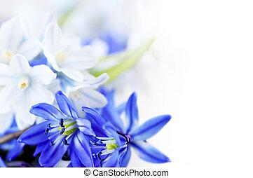 fleurs ressort, fond