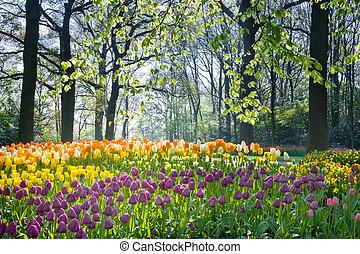 fleurs ressort, lumière, avril