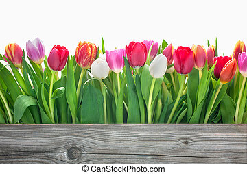fleurs ressort, tulipes