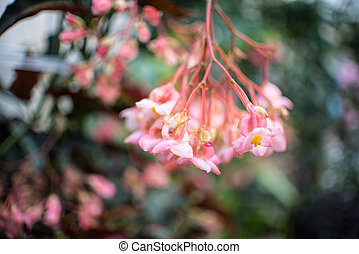 fleurs roses, fond, brouillé