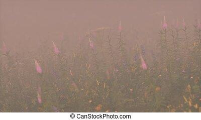 fleurs, sauvage, brouillard, champ, profond