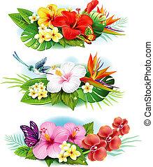 fleurs tropicales, arrangement