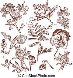 fleurs, usines, pousse feuilles, collection, vecteur, main, dessiné