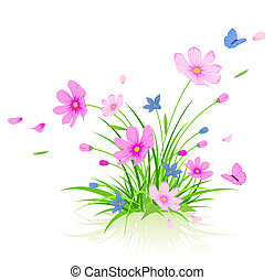 floral, cosmos, fleurs, fond