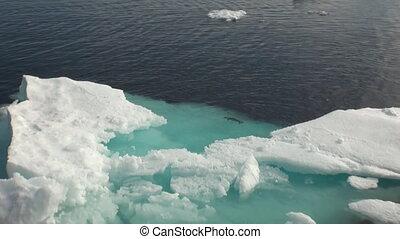 flotter, mer, iicebergs, autour de, greenland.