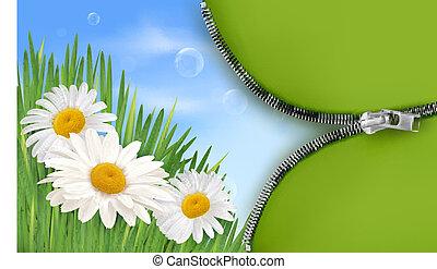 flowe, printemps, fond, nature