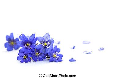 flowers., printemps
