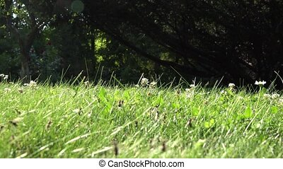 fly., essaimage, nid, fourmis, promenade, insecte, 4k, temps, pendant, herbe, accouplement, nature., ailes