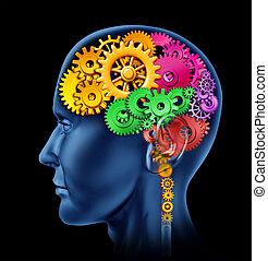 fonction, cerveau