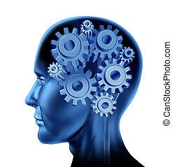fonction, intelligence, cerveau